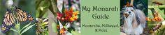http://www.mymonarchguide.com/2007/05/raising-caterpillars.html