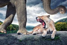 When Mother Nature and Photoshop Collide | Wildlife Composites by John Wilhelm