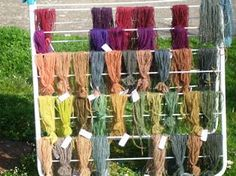 Some of the results of Celtic dye experiments. Top row: colours from lichen purple with vinegar added to the dye-bath (except for a couple of woad samples on the extreme right). Second row: lichen purple colours, without vinegar added to the dye-bath. Third row: colours from hedge bedstraw (Galium mollugo). Fourth row: colours from weld (Reseda luteola). Bottom row: colours from oak bark. On each row some of the samples have been over-dyed in woad.
