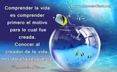 www.MarcelaOtero.org Comprender la vida es comprender primero el motivo para lo cual fue creada. Conocer al creador de la vida, nos dará la respuesta. Marcela Otero