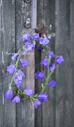 Bluebell wreath.