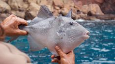 1000 images about survival blog articles on pinterest for Poisonous fish to eat
