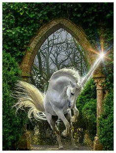 Unicorn And Fairies, Unicorn Fantasy, Unicorn Horse, Unicorn Art, White Unicorn, Mythical Creatures Art, Magical Creatures, Fantasy Creatures, Fantasy Paintings