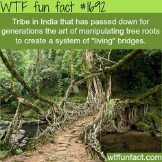 WTF Fun Facts is updated daily with interesting & funny random facts. We post about health, celebs/people, places, animals, history information and much more. New facts all day - every day! Wtf Fun Facts, Funny Facts, Random Facts, Strange Facts, Crazy Facts, Green Man, Blue Green, The More You Know, Did You Know
