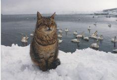 Go with cats, Aomori in Japan. Iwago Mitsuaki