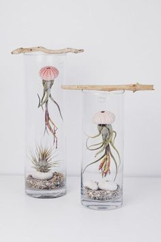 ZimtZebra: Jellyfish- Dekoration und Tillandsien (Airplant) Pflege (Cool Rooms Crafts)