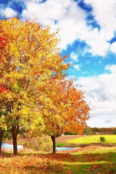 Beautiful Autumn Day iPhone Wallpaper