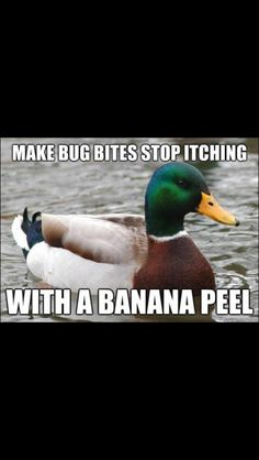 The best of Actual Advice Mallard meme. - Funny - Check out: Actual Advice Mallard Meme on Barnorama Freetime Activities, Things To Know, Good Things, Awesome Things, Inspiring Things, Crazy Things, Crazy Life, Happy Things, Crazy Crazy