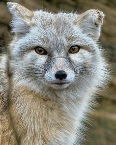 2720 best baby animals images on pinterest cutest animals fluffy