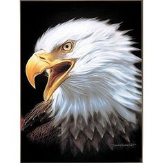 Royal Plush Extra Heavy Queen Size Mink Blanket - Eagle Spirit (79 inch x 85 inch )