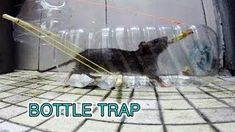 plastic bottle mouse trap (페트병 쥐덫)