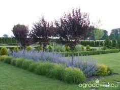 DUŻY OGRÓD małej ogrodniczki 1 - strona 563 - Forum ogrodnicze - Ogrodowisko