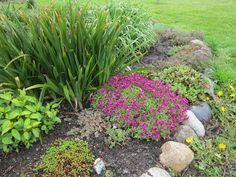 Top 10 Best Plants for a Rock Garden - Top Inspired Perennial Grasses, Herbaceous Perennials, Landscaping With Rocks, Landscaping Plants, Amazing Gardens, Beautiful Gardens, Rock Garden Plants, Alpine Plants, Landscaping Software