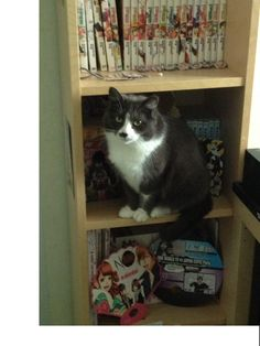 mon chat aime les manga !!!! :3
