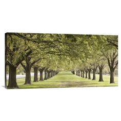 Global Gallery 'Rows of Trees Bordering Greensward (detail)' by Ocean Images Photographic Print on Wrapped Canvas