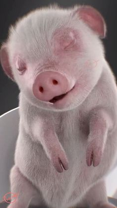 Cute Baby Pigs, Cute Piglets, Baby Animals Super Cute, Cute Little Animals, Funny Animal Jokes, Funny Animal Videos, Cute Funny Animals, Cute Cats, Cute Animal Photos