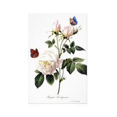 Pierre Joseph Redouté. Stationery Design ($0.90) ❤ liked on Polyvore featuring home, home decor, flowers, fillers, backgrounds, flora, other, vintage home decor, butterfly home decor and white home decor