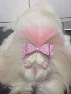 ideas dogs grooming styles for 2019 Dog Grooming Styles, Grooming Shop, Pet Grooming, Wedding Gifts For Bride, Dog Wedding, Corte Shitzu, Perro Shih Tzu, Puppy Haircut, Poodle Cuts