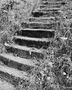 Stairway to Nature  Black and White by JeninesPhotography on Etsy, $25.00