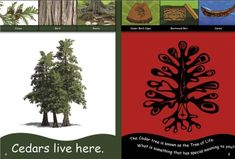 From the Mountains to the Sea: We Live Here, - Indigenous & First Nations Kids Books - Strong Nations What Is Tree, Indigenous Education, Cedar Trees, Schools First, First Nations, Social Studies, Kindergarten, This Book, Science
