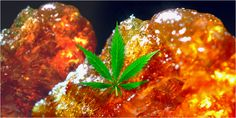 10 Best Concentrates You Need To Be Dabbing - https://houseofcobraa.com/2016/07/03/35691/