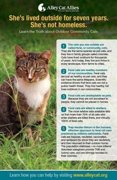 DONATE to our SNYP program today, which has altered over 1,000 community cats so far in 2013.  Donate any amount at www.yakimahumane.org.