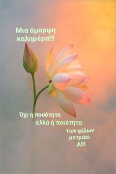 Spiritual Meaning, Spiritual Quotes, Different Types Of Flowers, Flower Meanings, Peace Of God, A Course In Miracles, Christian Wallpaper, Light Of The World, Peach Colors