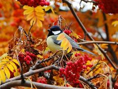 5 beautiful autumn pictures Share Pictures, Fall Pictures, Fall Is Here, Fall For You, Golden Leaves, Autumn Leaves, Animated Gifs, 25th Birthday, Bird Feeders