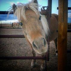 #ponyta #poniesareagirlsbestfriend #iwantapony #ahthecountrylife #countrylife @ #countryhomefarm #socute