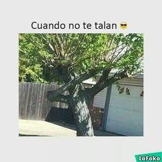 videoswatsapp.com videos graciosos memes risas gifs graciosos chistes divertidas humor http://ift.tt/2njZONl