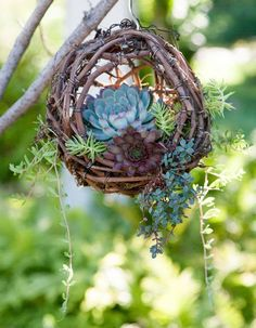 Hanging Grapevine Bird's Nest Succulent Planter