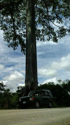 Land Rover Discovery, Costa Rica, Ceiba Petandra.