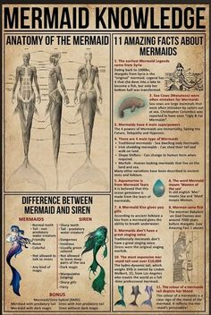 Mermaid Knowledge Amazing Facts About Mermaids Poster No Frame Mythical Creatures Art, Mythological Creatures, Magical Creatures, Mermaid Drawings, Mermaid Art, Mermaid History, Mermaids And Mermen, Merfolk, Book Of Shadows