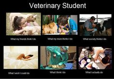 funny and vet image Becoming A Veterinarian, Veterinarian Career, Vet Tech Student, Student Life, Vet Clinics, Vet Med, Animal Science, Veterinary Medicine, Veterinary Care