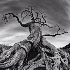 the Burmis Tree, in Crowsnest Pass Alberta Canada Western Canada, Unusual Plants, Rest Of The World, Alberta Canada, Landscape Photos, Beautiful Images, National Parks, Scenery, Spaces