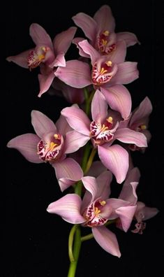 Cymbidium Orchids © Photo by Harold Feinstein - Modern Flowers Nature, Exotic Flowers, Tropical Flowers, Amazing Flowers, Beautiful Flowers, Orchid Flowers, Cymbidium Orchids, Orchid Wallpaper, Nature Wallpaper