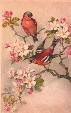 bird art- red birds on dogwood branches Art Vintage, Vintage Images, Dogwood Tattoo, Painting Antique Furniture, Vintage Furniture, Decoupage, Ouvrages D'art, China Painting, Bird Pictures