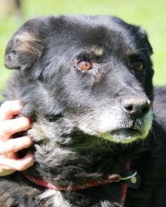 dejlig hund søger nyt hjem