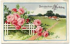 B2453 Pink Roses on White Fence Rural View Embossed Antique Birthday Postcard