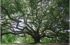 Image result for types of trees