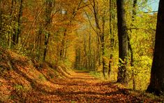 funny fall photos | Fall Autumn Forrest Wallpaper | LOLd | Wallpaper - Funny Pictures ...