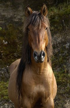 Wild Horse Equus Caballus In Open Print By Pete Oxford