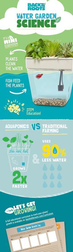 #hydroponicgardening #urbangardening #containergardeningvegetables