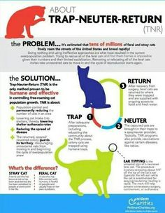On pinterest feral cat shelter feral cats and feral cat house
