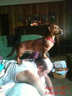 """""""Perched""""... Chief here is getting a boost from his dad (whether dad likes it or not!)"""