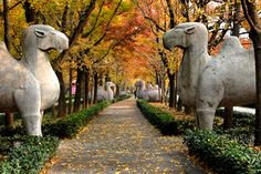 Ming Tombs at Nanjing, China. Avenue of the Animals Chinese Culture, Chinese Art, Ancient Tomb, Nanjing, China Travel, Places Of Interest, Travel Goals, Southeast Asia, Travel Around