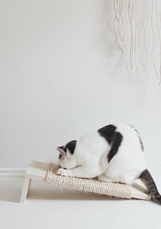 Pretty DIY Projects for Cat Owners | Apartment Therapy - Tap the link now to see all of our cool cat collections!