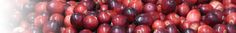 where to get fresh cranberries for home canning and gifts.  Cape Cod Cranberry Growers Association