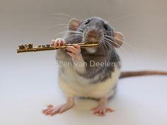 Крысы-музыканты