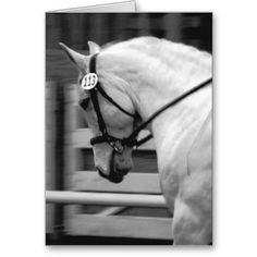 Dressage Cards Horses Business Visit Carte De Visite